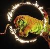Цирки в Веневе