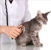 Ветеринарные клиники в Веневе